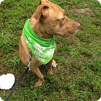 Adopt A Pet :: Brandy - Coral Springs, FL