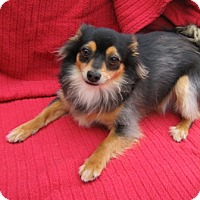 Adopt A Pet :: Jenny - Tracy, CA