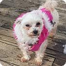 Adopt A Pet :: Pearl (NJ)