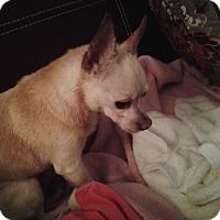 Adopt A Pet :: Peachie - Douglasville, GA