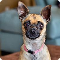 Adopt A Pet :: Francie - Austin, TX