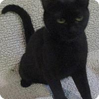Adopt A Pet :: Betty - Witter, AR