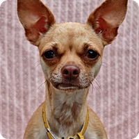 Adopt A Pet :: Princess - Redondo Beach, CA