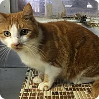 Adopt A Pet :: Mona - Larchmont, NY