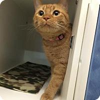 Adopt A Pet :: Ursula - Beatrice, NE