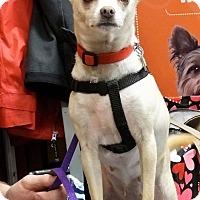 Adopt A Pet :: Ally - Memphis, TN