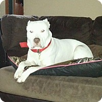 Adopt A Pet :: Kojo - Winchester, VA
