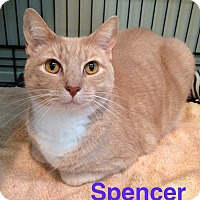 Adopt A Pet :: SPENCER aka SPECKLES - Hamilton, NJ