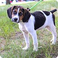 Adopt A Pet :: Nero - New Oxford, PA