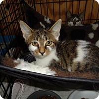 Adopt A Pet :: Tessa - Breinigsville, PA