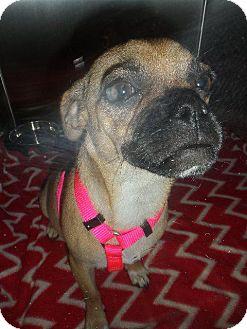 Pug Dog for adoption in Gardena, California - Simone