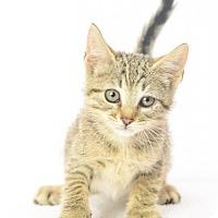 Adopt A Pet :: Gypsy - Oxford, MS