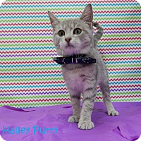 Adopt A Pet :: Halley Purry - Bucyrus, OH