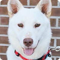 German Shepherd Dog Mix Dog for adoption in Gretna, Nebraska - Kailee