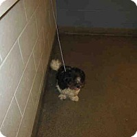 Adopt A Pet :: STEVIE - Jacksonville, FL