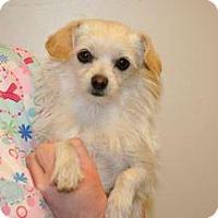 Adopt A Pet :: Nicky - Wildomar, CA