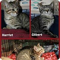 Adopt A Pet :: Harriet - New Richmond,, WI