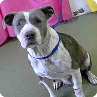 Adopt A Pet :: URGENT on 12/9 @DEVORE - San Bernardino, CA