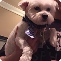 Adopt A Pet :: Alex 3409 - Toronto, ON