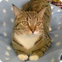 Adopt A Pet :: Macduff - Trevose, PA