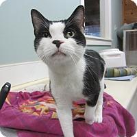 Adopt A Pet :: Johnnie - Kingston, WA