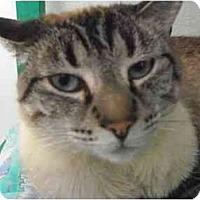 Adopt A Pet :: Maddie - El Cajon, CA