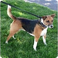 Adopt A Pet :: Queenie family dog - Sacramento, CA