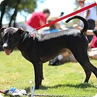 Adopt A Pet :: Comet - Justin, TX