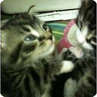 Adopt A Pet :: Pip - New Egypt, NJ