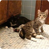 Adopt A Pet :: Petey - Westfield, MA