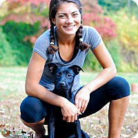 Adopt A Pet :: Desi - Randolph, NJ