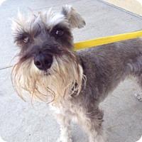 Adopt A Pet :: Romi - Redondo Beach, CA