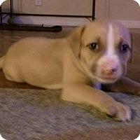 Adopt A Pet :: Annie Oakley - Gainesville, FL