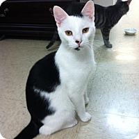 Adopt A Pet :: Leo - Trevose, PA