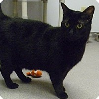 Adopt A Pet :: Francisco - Hamburg, NY
