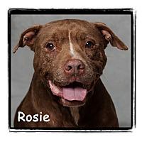 Adopt A Pet :: Rosie - Warren, PA