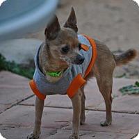 Adopt A Pet :: Little Bit / Courtesy Posting - Tucson, AZ