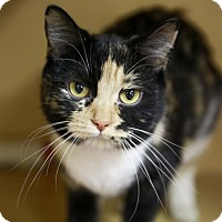 Adopt A Pet :: Meow-Meow - Kettering, OH