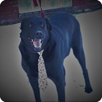 Adopt A Pet :: Buddy - Baden, PA