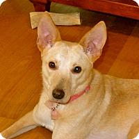 Adopt A Pet :: Sophie - Surrey, BC