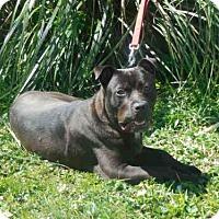 Adopt A Pet :: DIEGO - McKinleyville, CA