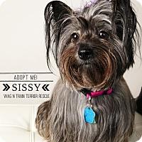 Adopt A Pet :: Sissy - Omaha, NE