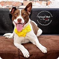 Adopt A Pet :: Demi - Apache Junction, AZ
