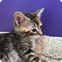Adopt A Pet :: Cami - San Jose, CA