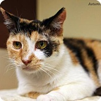 Adopt A Pet :: Cleo - Baltimore, MD