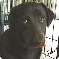 Adopt A Pet :: Jewel - Barrington, RI