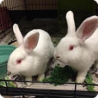 Adopt A Pet :: Hank - Bellingham, WA
