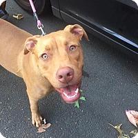 Adopt A Pet :: Scarlette (URGENT!!!!) - Plainfield, CT