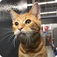 Adopt A Pet :: Journey - Wayne, NJ