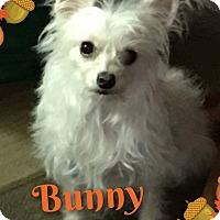 Adopt A Pet :: Bunny - Walker, LA